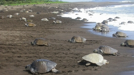 Green Sea Turtle Nesting Tour